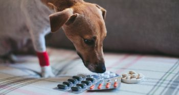 What can I give my dog for arthritis pain over the counter