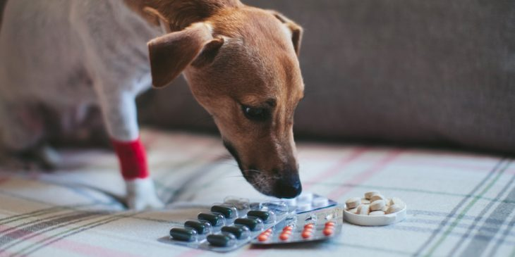 Can Dogs Have Advil For Arthritis