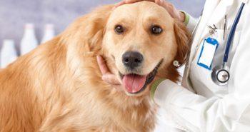 Dog Glucosamine Overdose