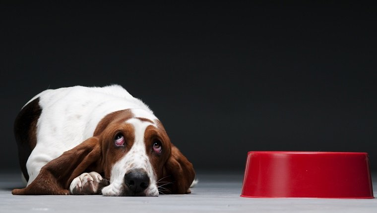 glucosamine and chondroitin sulfate for dogs