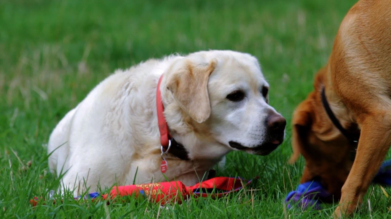 Osteo-Pet Liquid Glucosamine for Dogs