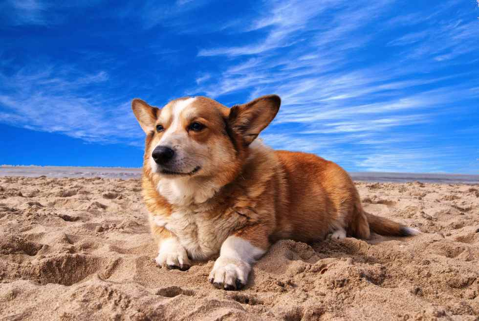 how often should i give my dog glucosamine