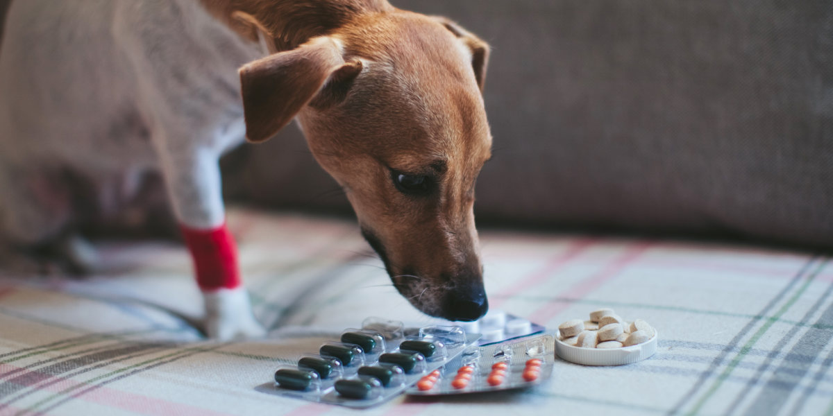What Human Painkillers Can You Give Dogs