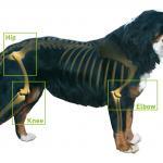 Using Glucosamine to Prevent Canine Osteoarthritis