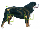 Rescue Remedy For Dogs Overdose